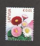 de Europa - Letonia -  Margaritas