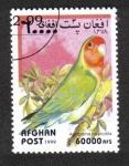Stamps : Asia : Afghanistan :  Loros, Colibrí De Cuello Rosado (Agapornis roseicollis)