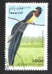 Stamps : Asia : Afghanistan :  Pájaro, Paradise Willowbird (Stegura paradise)