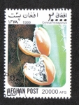 Stamps : Asia : Afghanistan :  Cactus, Cactus de la Dama de la Noche (Cereus hexagonus)