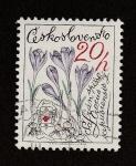 Stamps Europe - Czechoslovakia -  Crocus scepusiensis
