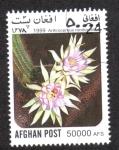 de Asia - Afganistán -  Cactus, Arthrocereus (Arthrocereus rondonianus)