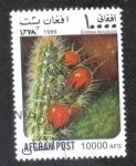 de Asia - Afganistán -  Cactus, Corryocactus (Erdisia tenuicula)