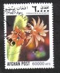 de Asia - Afganistán -  Cactus, Rat tail cactus (Hildewintera aureispina)