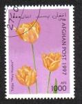 de Asia - Afganistán -  Tulipanes