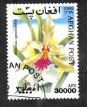 Stamps : Asia : Afghanistan :  Orquídeas, Miltonia spectabilis - Miltonia excepcional