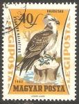 Sellos de Europa - Hungría -  251 - Ave de presa