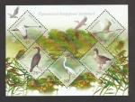 Stamps Ukraine -  Phalacrocorax pygmaeus