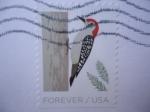 Stamps America - United States -  Pájaro Carpintero - Pájaro de Invierno.