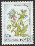 de Europa - Hungría -  2324 - Flor pulmonaire veloute