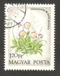 de Europa - Hungría -  2325 - Flor paquerette