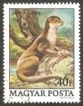 de Europa - Hungría -  2690 -  Nutria