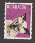 Stamps Nicaragua -  Gato siamés