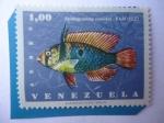 sellos de America - Venezuela -  RAM- Apistogramma Ramirezi - Serie:Vida Marina.