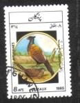 Sellos de Asia - Afganistán -  Aves, Faisán común (Phasianus colchicus)