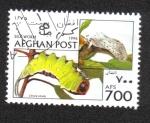 Stamps : Asia : Afghanistan :  Gusano de Seda, Puss Moth (Cerura vinula)