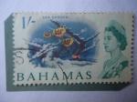 Sellos de America - Bahamas -  Sea Garden- Jardín de Mar - Nassau- Sergeant Mayor (Abudefduf saxatili), (pez)