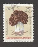Stamps Germany -  Gyromira esculenta