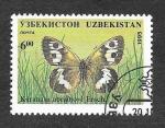 Sellos del Mundo : Asia : Uzbekistán : 80 - Mariposa