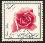 Sellos de Europa - Polonia -  Flores - Rosa