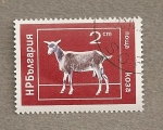 Stamps Bulgaria -  Animales domésticos: cabra