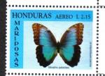 Stamps : America : Honduras :  Morpho común (morpho peleides)