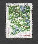Stamps United States -  Rama de cedro rojo