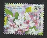 Sellos de Europa - Rusia -  Flores