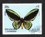 Sellos del Mundo : Asia : Emiratos_Árabes_Unidos : Mariposas, Ave de pájaro (Ornithoptera sp.)