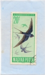 Stamps Hungary -  Aves