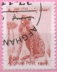 Stamps : Asia : Afghanistan :  Acinonyx jabatus