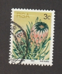 Stamps South Africa -  Protea nerifolia