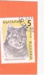 Stamps Europe - Bulgaria -  GATO DOMÉSTICO