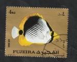 Stamps Asia - United Arab Emirates -  Fujeira - Pez