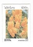 de Asia - Laos -  Ascocentrum miniatum