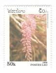 de Asia - Laos -  Dendobrium secundum
