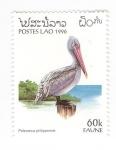 de Asia - Laos -  Pelícano