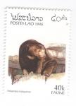 de Asia - Laos -  Oso malayo