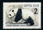 Stamps Europe - Russia -  Oso panda
