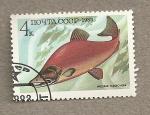 Stamps Russia -  Peces comestibles:Oncorhinchus nerka