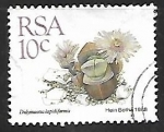 Stamps : Africa : South_Africa :  Didymaotus lapidiformis