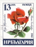sello : Europa : Bulgaria : FLORES- rosa roja