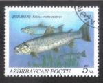 Stamps Asia - Azerbaijan -  Peces, Caspian Trout (Salmo trutta caspius)