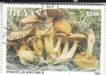 de America - Guyana -  SETAS- GYMNOPILUS SPECTABILIS