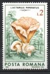 de Europa - Rumania -  HONGOS.  LACTARIUS  PIPERATUS.