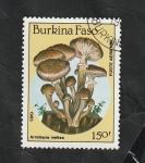 Stamps : Africa : Burkina_Faso :  311 - Champiñón, Armillaria mellea