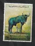 de Asia - Emiratos Árabes Unidos -  Ajman - Ñus