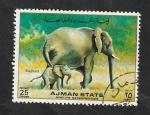 de Asia - Emiratos Árabes Unidos -  Ajman - Elefantes