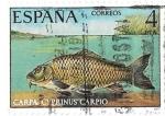 Sellos de Europa - España -  carpa