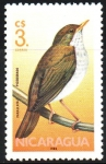 Stamps : America : Nicaragua :  PARAULATA   PICO   DORADO